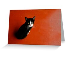 Cameroon Cat Greeting Card