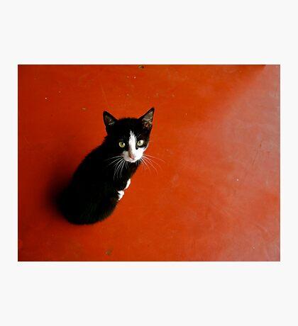 Cameroon Cat Photographic Print