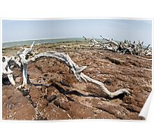 Driftwood at Talbot Island Poster