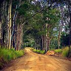 Booie Bush Road by tracielouise