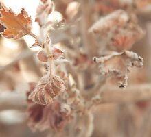 the Cinematic Leaf! by Omar Al Nimer