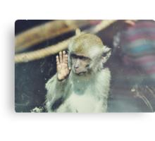 Monkey at the Curragh's Wildlife Park Metal Print