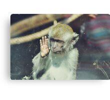 Monkey at the Curragh's Wildlife Park Canvas Print