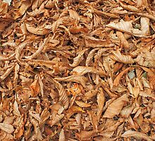 Surface of the ground in the park, covered with fallen leaves by vladromensky