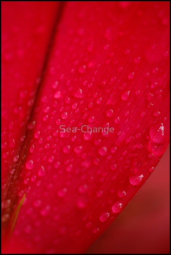 Raindrops on Red by Sea-Change