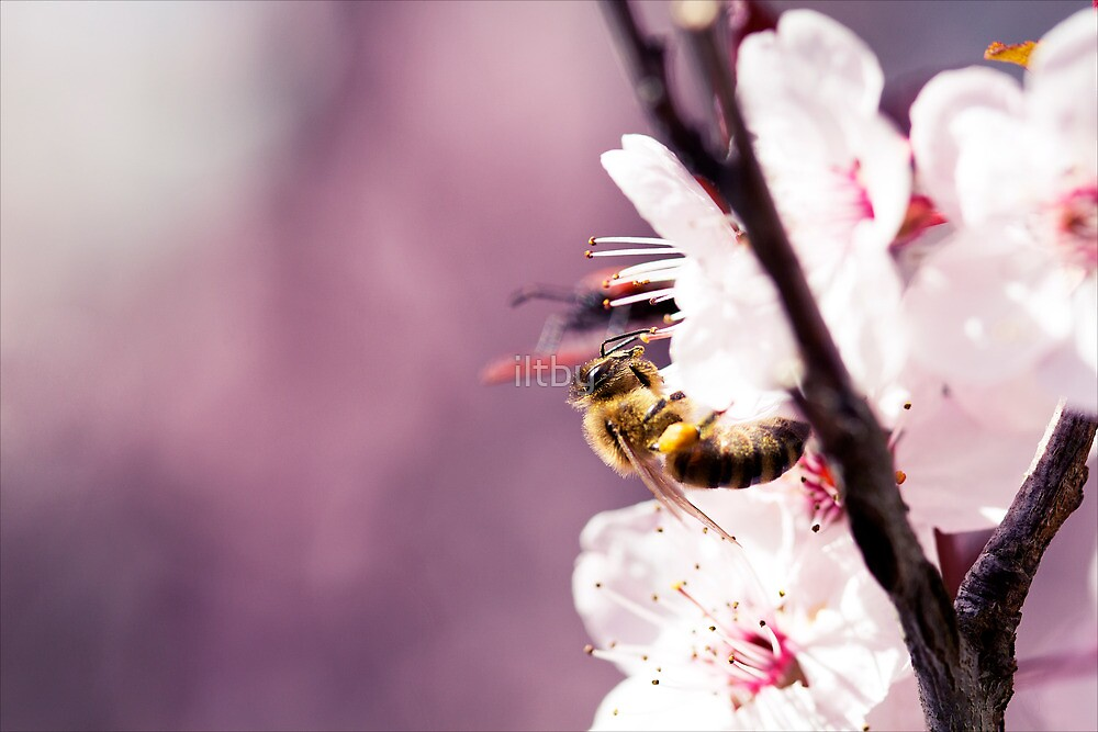 Plums And Pollen by Josie Eldred