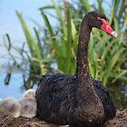 Black Swan & Cygnet by Melanie  Barker