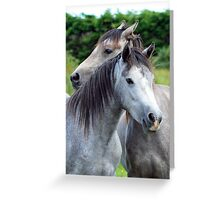 Best Friends - Connemara Ponies Greeting Card