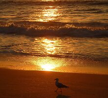 (Sunset Series ~ 2)  Strutting Seagull Stealing The Limelight by Toni Kane