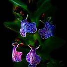 Fractal Lilac Elegy by Atılım GÜLŞEN