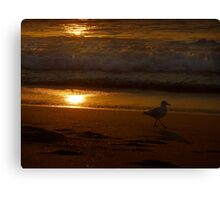 (Sunset Series ~1)  Seagull On Board Canvas Print