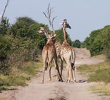 Lets hit the road! by Mark Braham