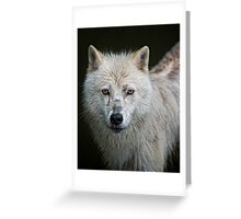 Portrait of an Arctic Wolf Greeting Card