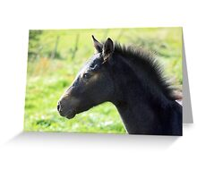 Connemara Pony Foal in Green Field Greeting Card