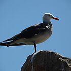 Seagull by Melanie  Barker