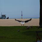 Flight Of A Seagull by Melanie  Barker