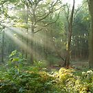 Ray of light  by yampy