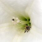 Where a Bee Should Be by CarolM
