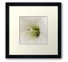 Where a Bee Should Be Framed Print