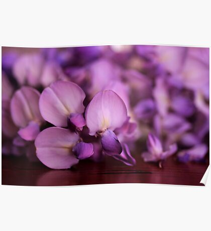 Wisteria On Top Of A Desk Poster