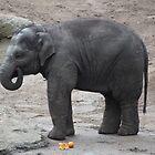Baby Elephant by Melanie  Barker