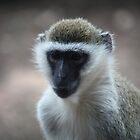 Monkey by Melanie  Barker