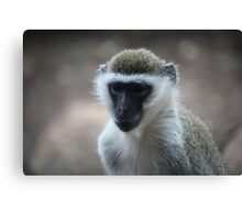 Monkey Canvas Print