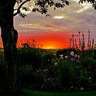 A Somerset Sunset. by Daniel  Archer