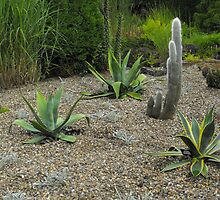 Greenbank Cacti Gardens Clarkston. Glasgow by ElsT