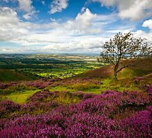 Stiperstones Heather, Shropshire, England by Giles Clare