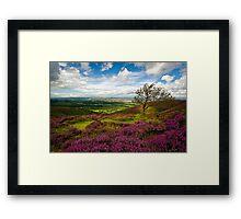 Stiperstones Heather, Shropshire, England Framed Print