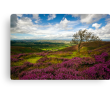Stiperstones Heather, Shropshire, England Canvas Print