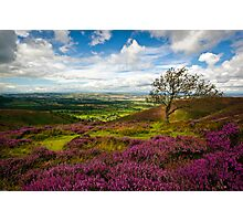Stiperstones Heather, Shropshire, England Photographic Print