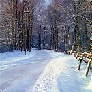 Winter Road by Alberto  DeJesus