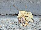 Fallen by Ruth LeFaive