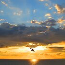 Frigate bird sailing in the sky by Bernhard Matejka