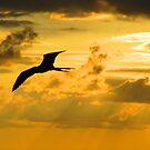 Bird sailing in yellow sky - Ave cruzando el cielo amarillo by Bernhard Matejka