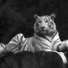 White Tiger by Britta Döll