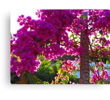 Bougainvilleas in the bright tropical sun Canvas Print