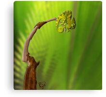 Leaf Chameleon Canvas Print