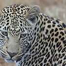 Simply Love the Leopard by MarkySA