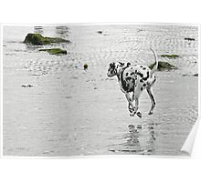 Dangling Dalmatian ;) Poster