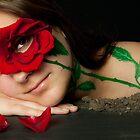 A single rose by Stephanie Ann