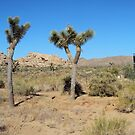 Two Joshua Trees Conversing by Bearie23