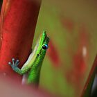 Green Gecko by Michael L. Colwell