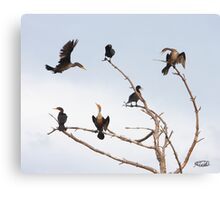 Cormorant Roost Canvas Print