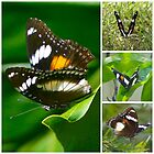 Butterfly by Melania
