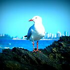 Seagull by Melania