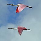 Synchronized flying in pink! by jozi1