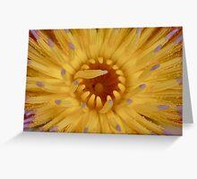 Waterlilly - macro Greeting Card